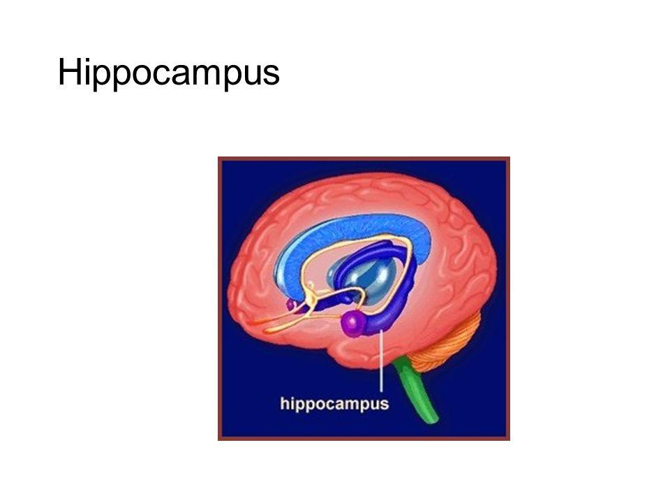 Hippocampus De hippocampus was niet afwijkend tussen beide groepen qua volume.
