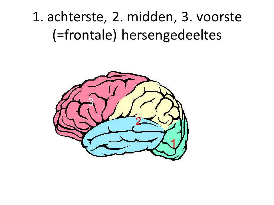 1. achterste, 2. midden, 3. voorste (=frontale) hersengedeeltes