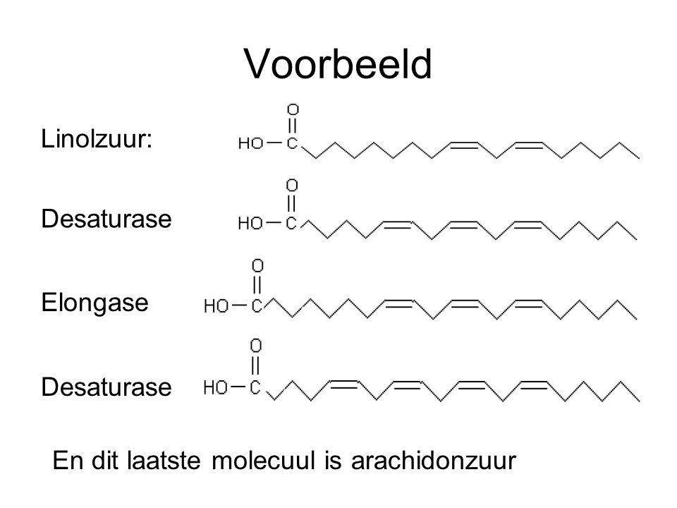 Voorbeeld Linolzuur: Desaturase Elongase Desaturase