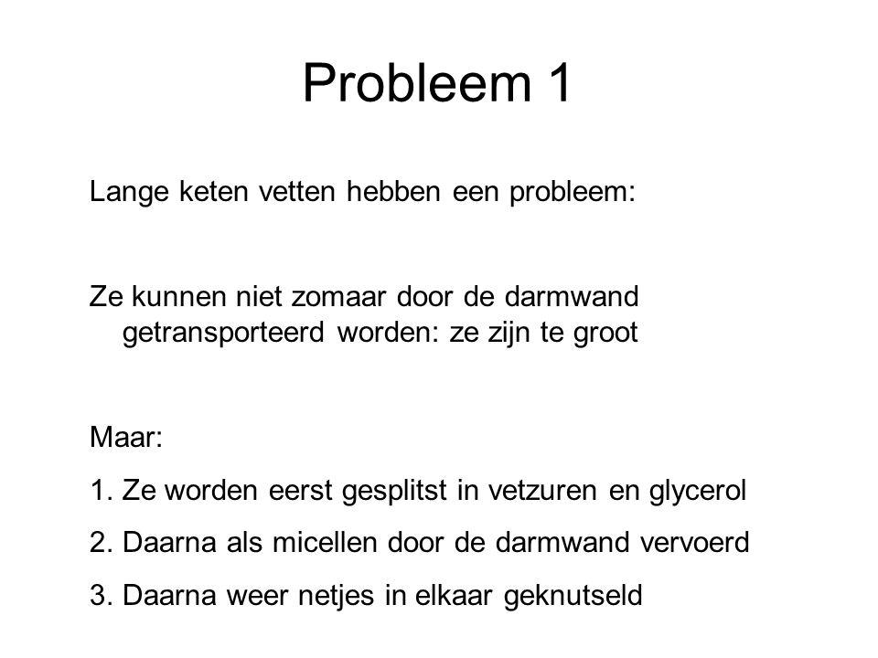 Probleem 1 Lange keten vetten hebben een probleem: