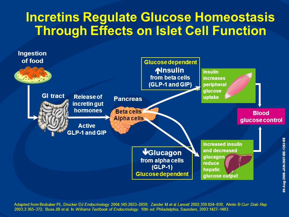 Incretins Regulate Glucose Homeostasis Through Effects on Islet Cell Function