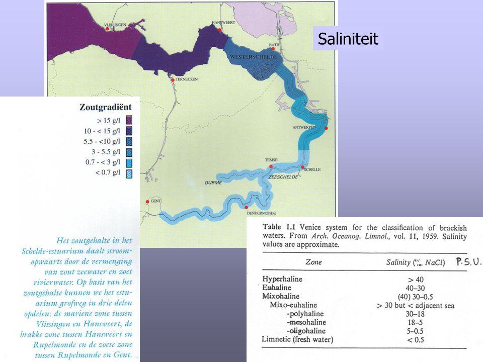 Saliniteit