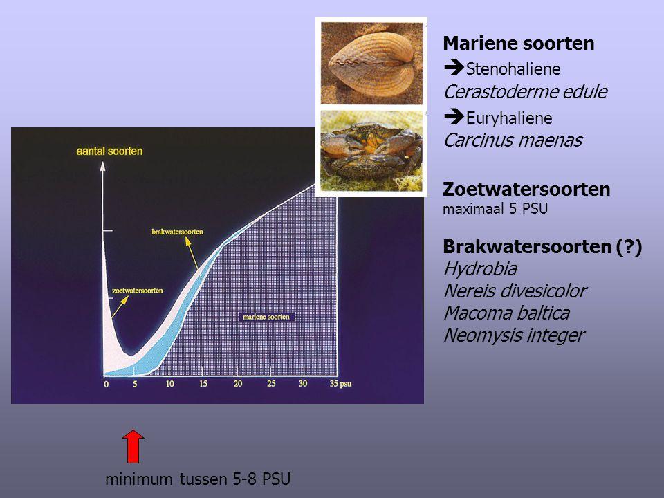 Stenohaliene Euryhaliene Mariene soorten Cerastoderme edule