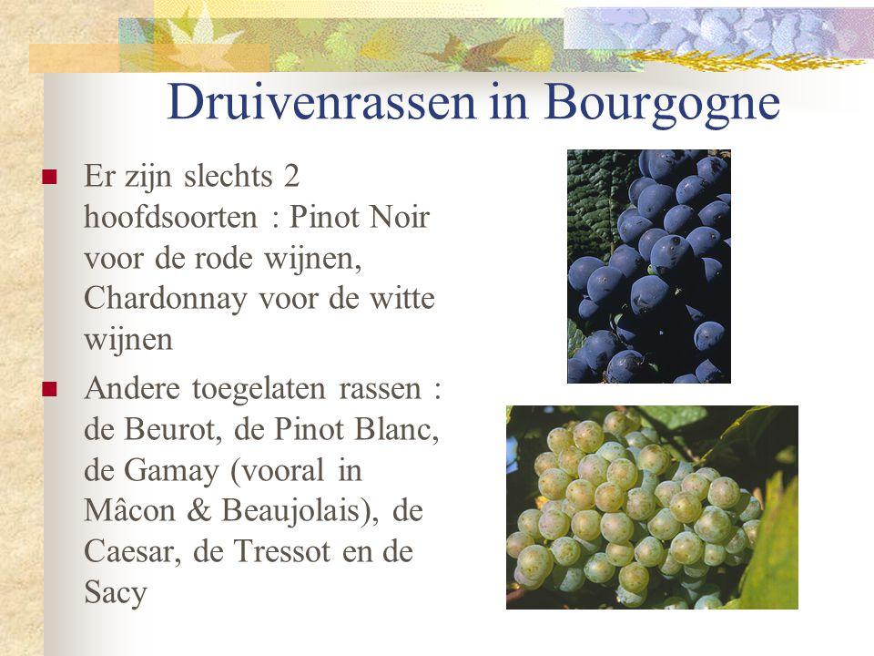 Druivenrassen in Bourgogne