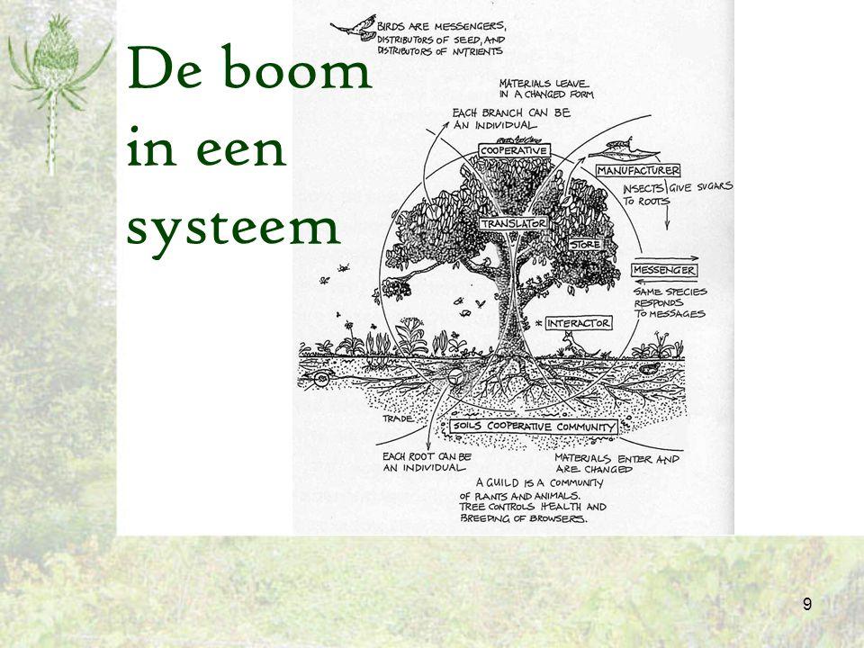 De boom in een systeem