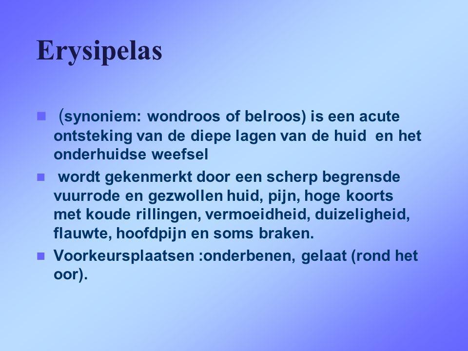 Erysipelas (synoniem: wondroos of belroos) is een acute ontsteking van de diepe lagen van de huid en het onderhuidse weefsel.
