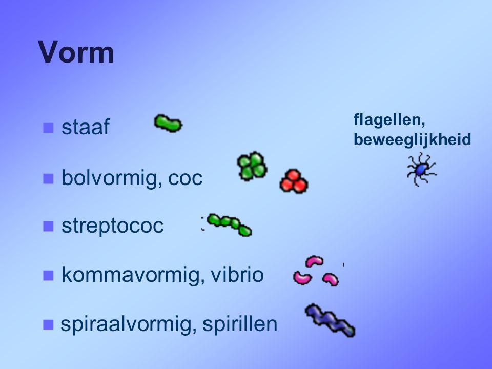 Vorm staaf bolvormig, coc streptococ kommavormig, vibrio
