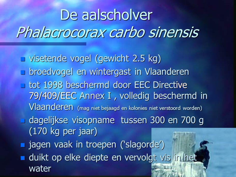 De aalscholver Phalacrocorax carbo sinensis