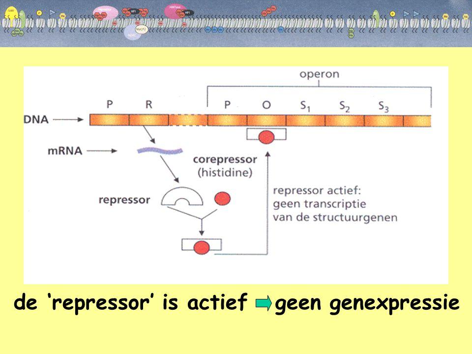 de 'repressor' is actief geen genexpressie