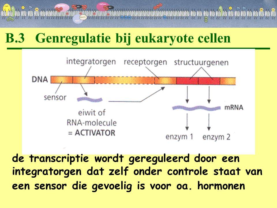 B.3 Genregulatie bij eukaryote cellen
