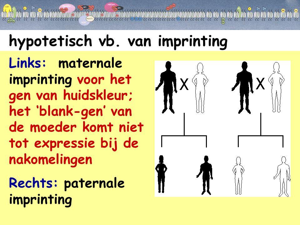 hypotetisch vb. van imprinting