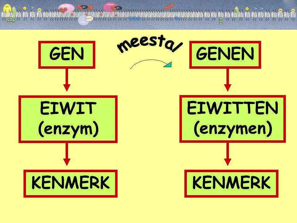 GEN GENEN EIWIT (enzym) EIWITTEN (enzymen) KENMERK KENMERK