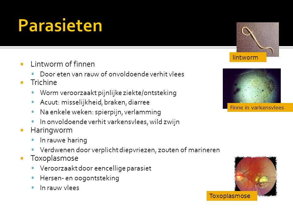 Parasieten Lintworm of finnen Trichine Haringworm Toxoplasmose