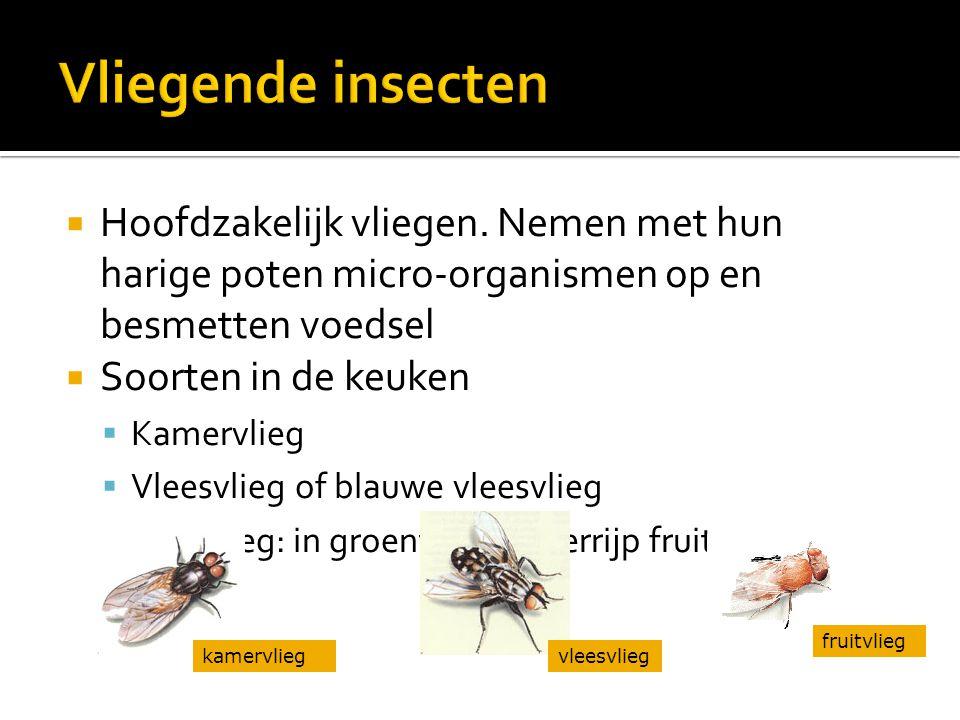 Vliegende insecten Hoofdzakelijk vliegen. Nemen met hun harige poten micro-organismen op en besmetten voedsel.