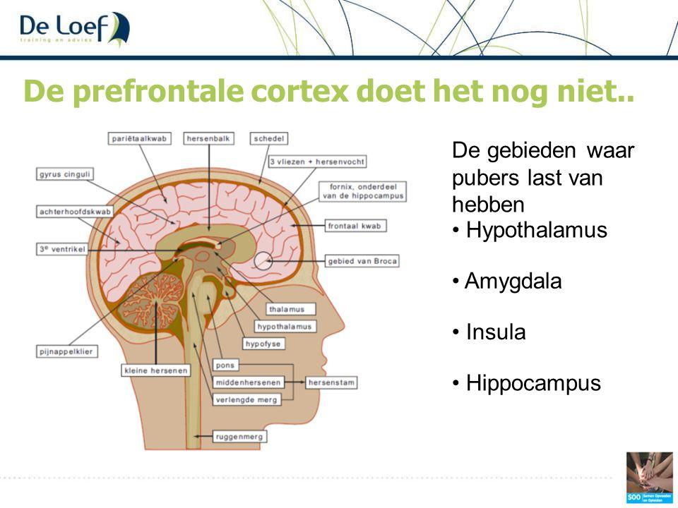 De prefrontale cortex doet het nog niet..