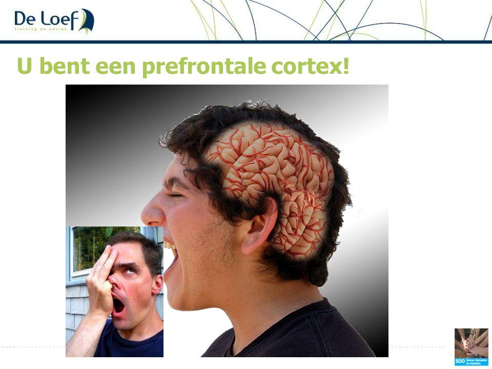 U bent een prefrontale cortex!
