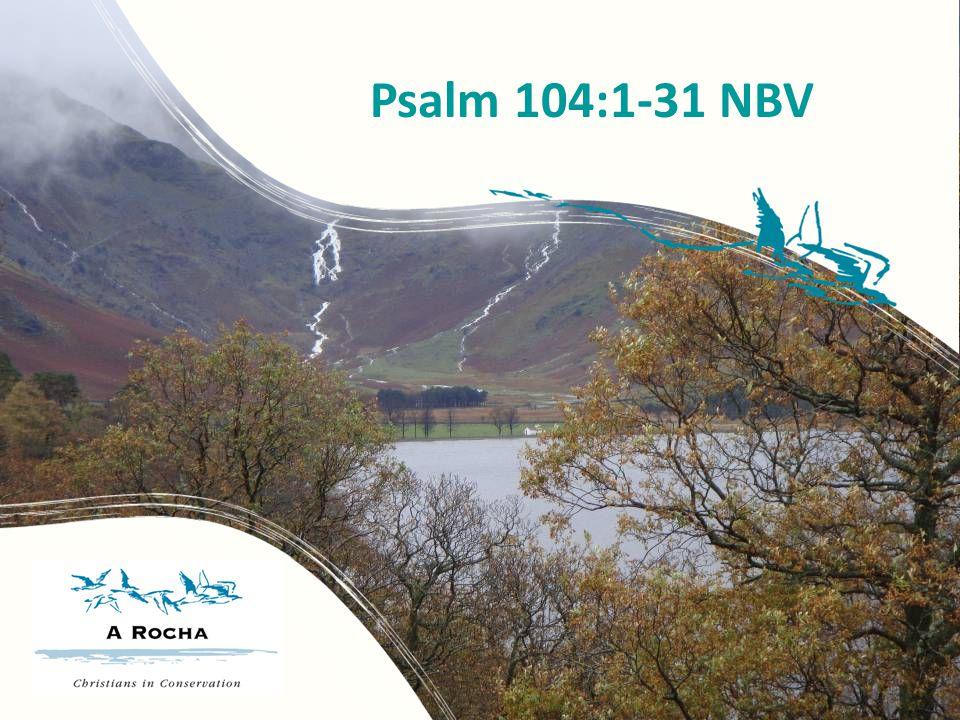 Psalm 104:1-31 NBV