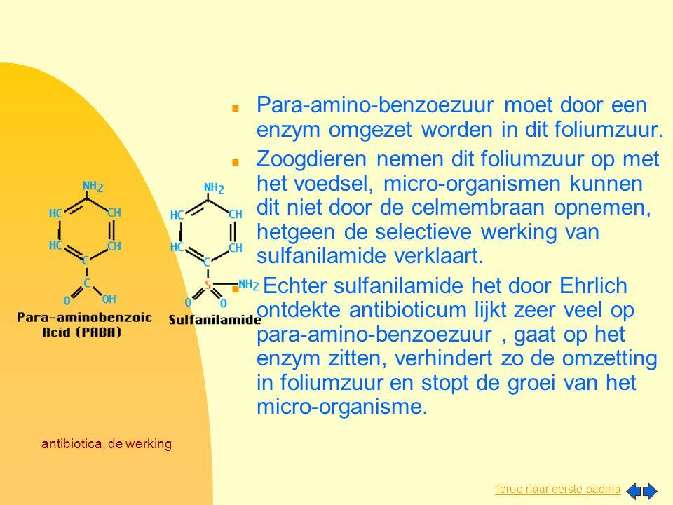 antibiotica, de werking