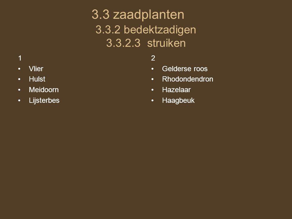 3.3 zaadplanten 3.3.2 bedektzadigen 3.3.2.3 struiken