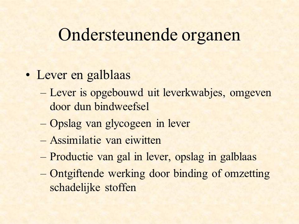 Ondersteunende organen