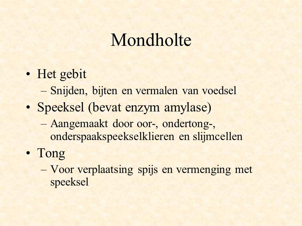 Mondholte Het gebit Speeksel (bevat enzym amylase) Tong