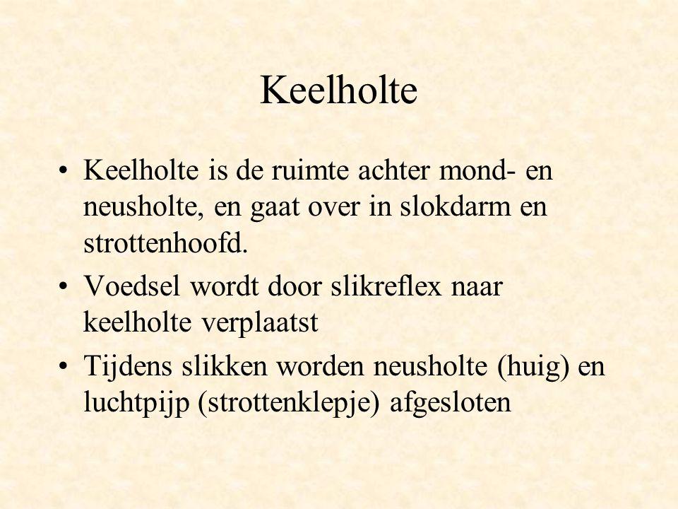 Keelholte Keelholte is de ruimte achter mond- en neusholte, en gaat over in slokdarm en strottenhoofd.