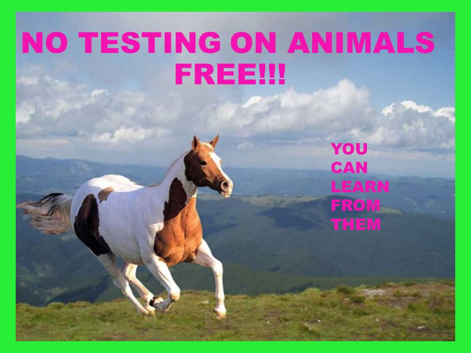 NO TESTING ON ANIMALS FREE!!! YOU CAN LEARN FROM THEM