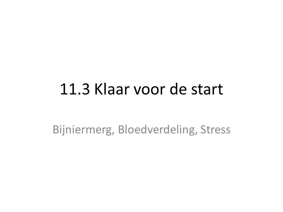 Bijniermerg, Bloedverdeling, Stress