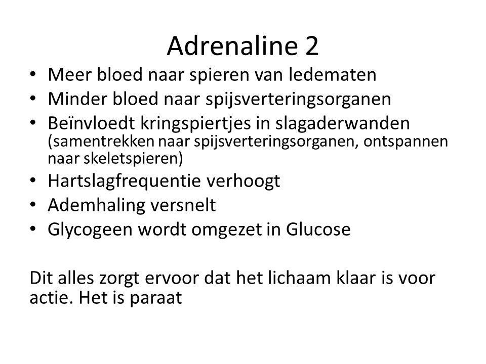 Adrenaline 2 Meer bloed naar spieren van ledematen