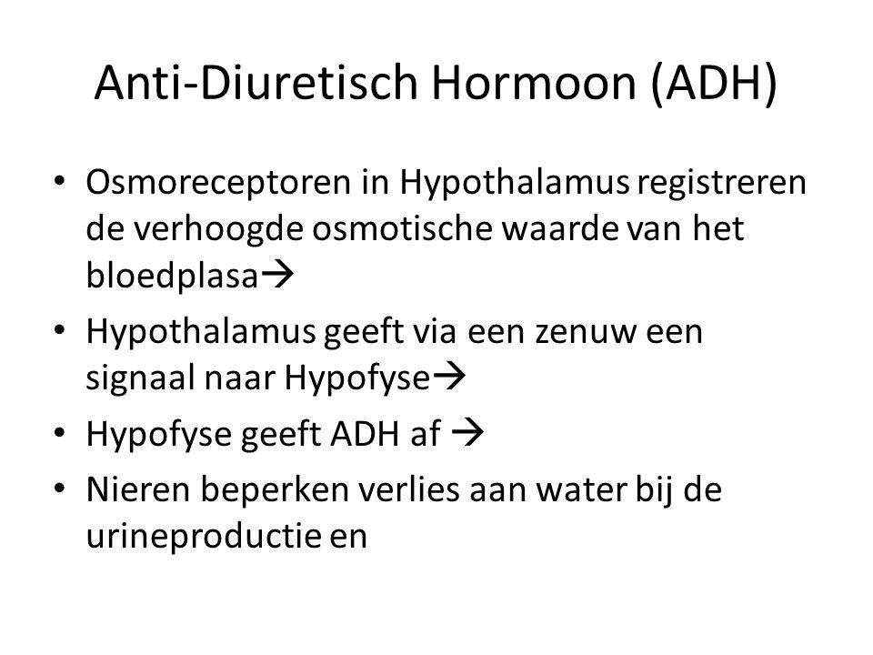 Anti-Diuretisch Hormoon (ADH)