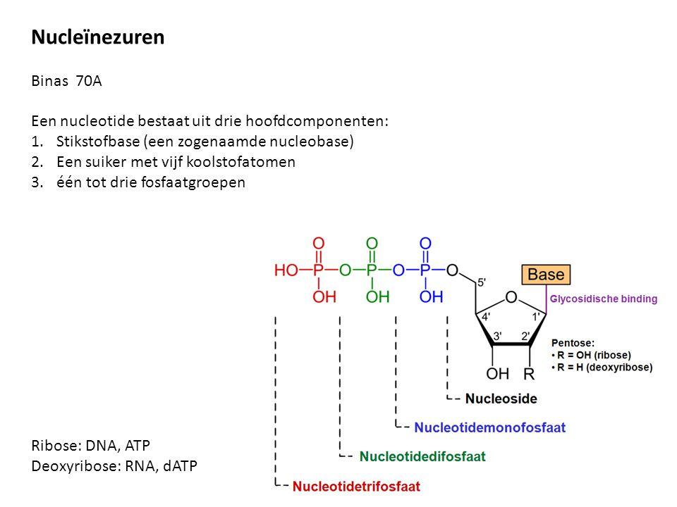 Nucleïnezuren Binas 70A. Een nucleotide bestaat uit drie hoofdcomponenten: Stikstofbase (een zogenaamde nucleobase)