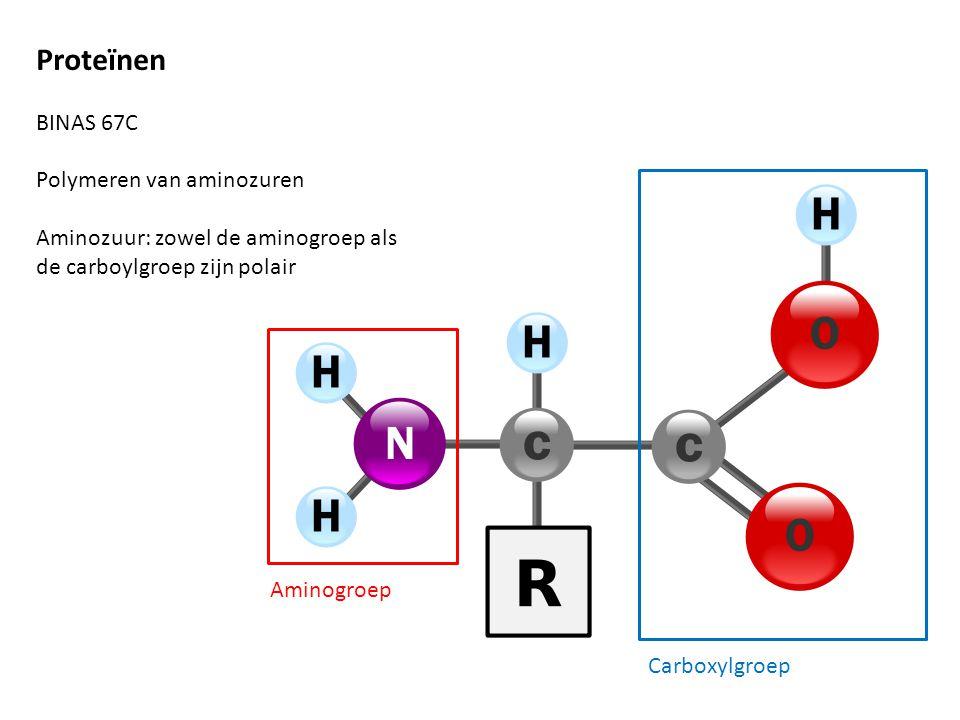 Proteïnen BINAS 67C Polymeren van aminozuren