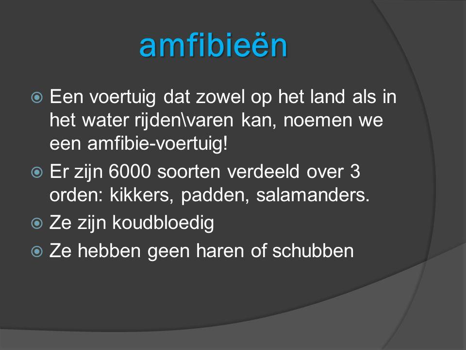 amfibieën Een voertuig dat zowel op het land als in het water rijden\varen kan, noemen we een amfibie-voertuig!