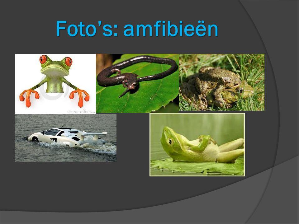 Foto's: amfibieën