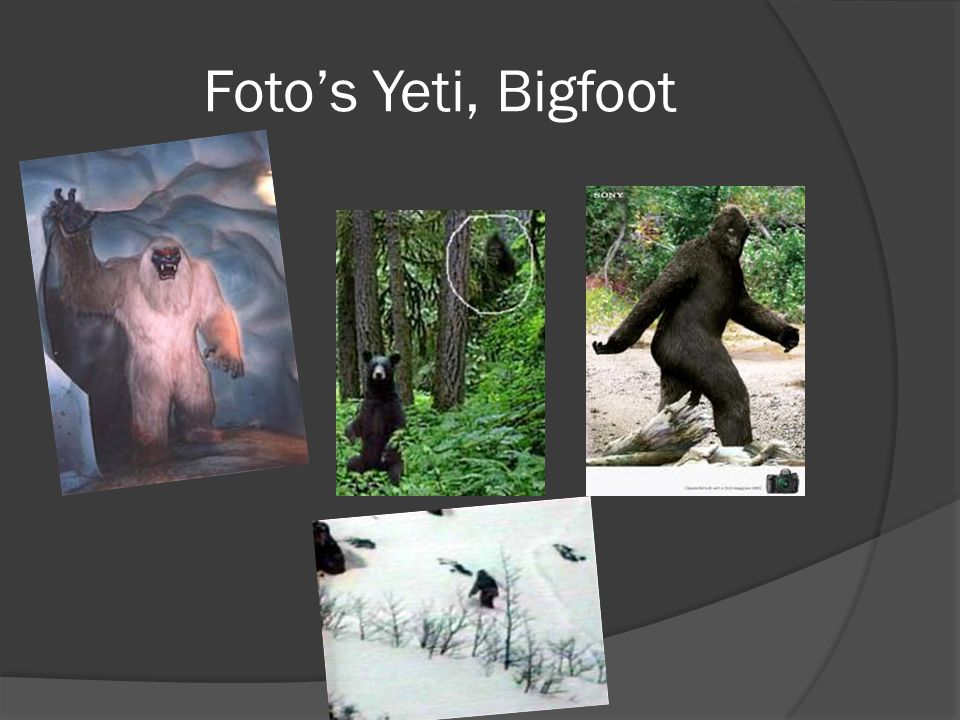 Foto's Yeti, Bigfoot