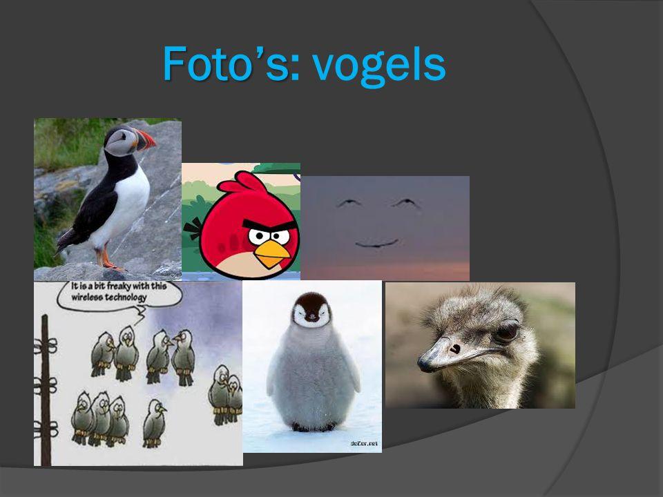 Foto's: vogels