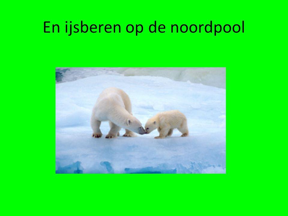 En ijsberen op de noordpool