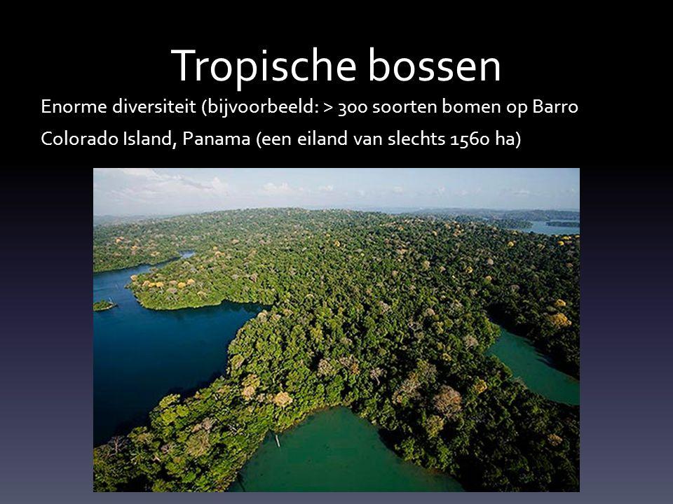 Enorme diversiteit (bijvoorbeeld: > 300 soorten bomen op Barro Colorado Island, Panama (een eiland van slechts 1560 ha)