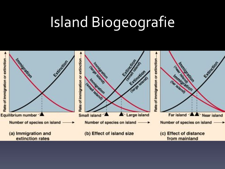 Island Biogeografie
