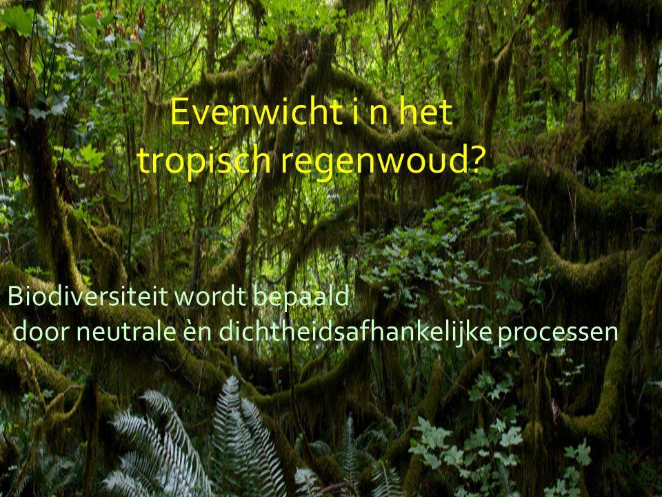 Evenwicht i n het tropisch regenwoud