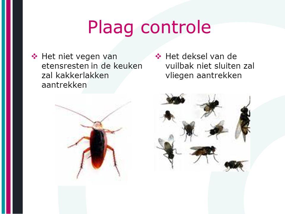 Plaag controle Het niet vegen van etensresten in de keuken zal kakkerlakken aantrekken.