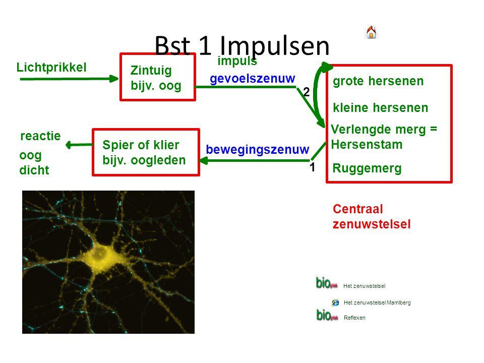 Bst 1 Impulsen impuls Lichtprikkel Zintuig bijv. oog gevoelszenuw
