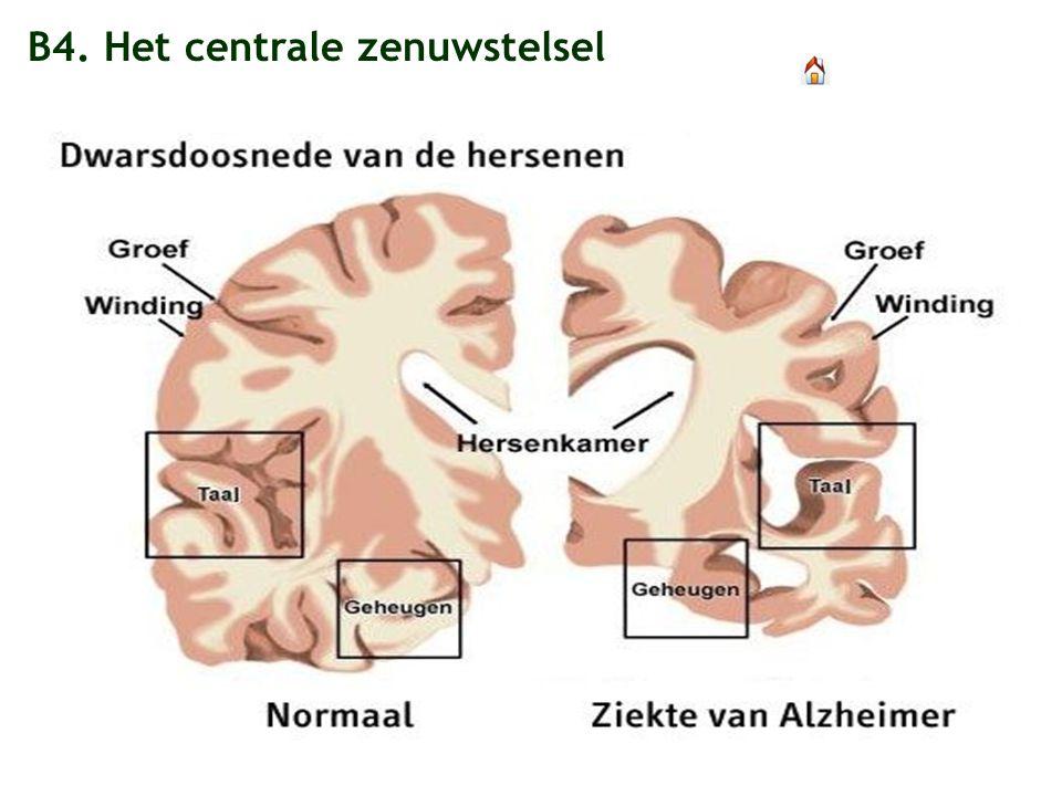 hersenen en zenuwstelsel
