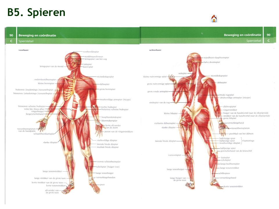 B5. Spieren