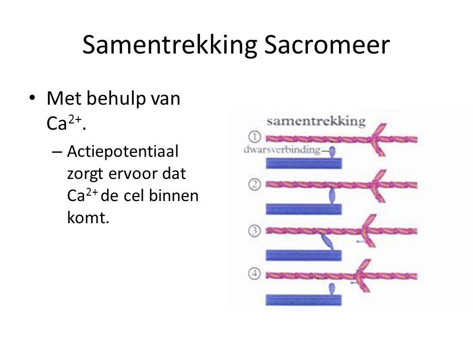 Samentrekking Sacromeer
