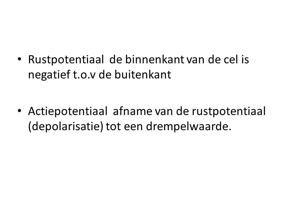 Rustpotentiaal de binnenkant van de cel is negatief t. o