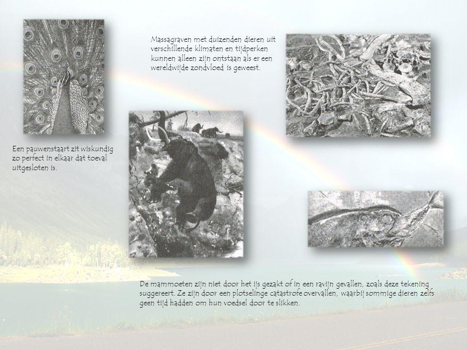 Massagraven met duizenden dieren uit verschillende klimaten en tijdperken kunnen alleen zijn ontstaan als er een wereldwijde zondvloed is geweest.