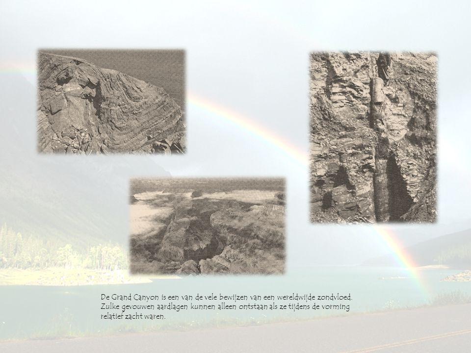 De Grand Canyon is een van de vele bewijzen van een wereldwijde zondvloed.