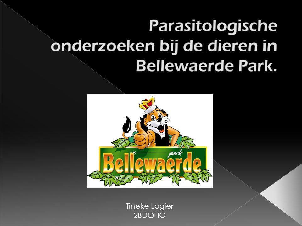 Parasitologische onderzoeken bij de dieren in Bellewaerde Park.