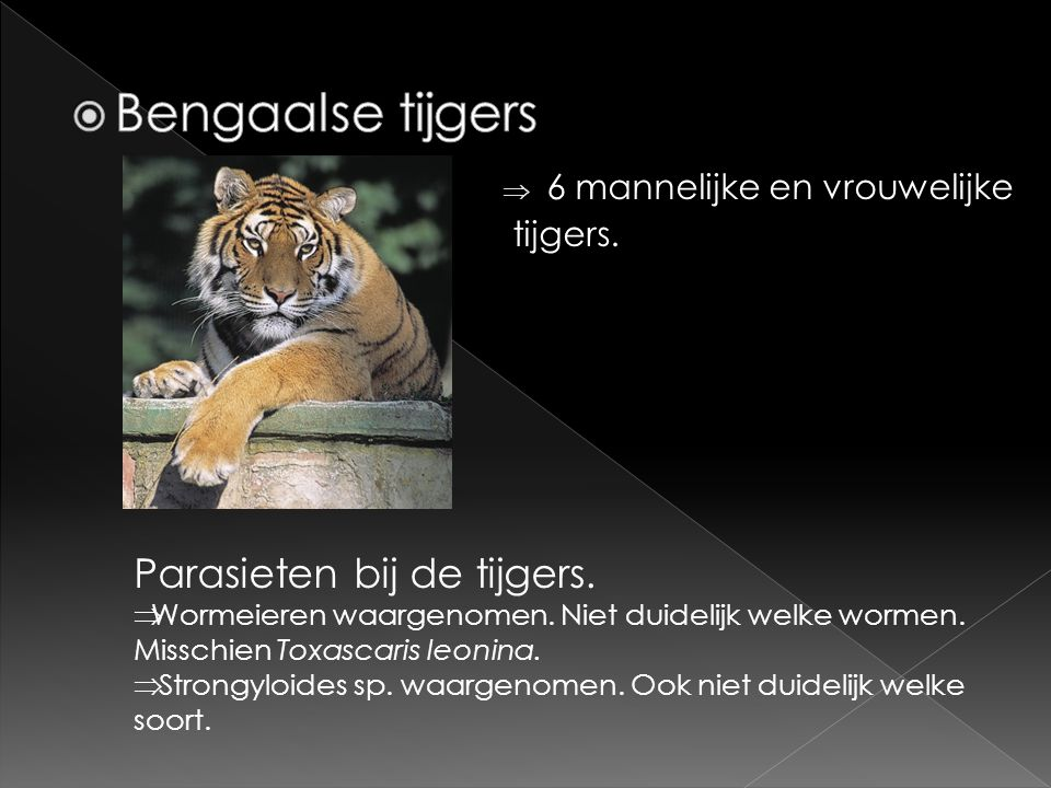 Bengaalse tijgers Parasieten bij de tijgers.